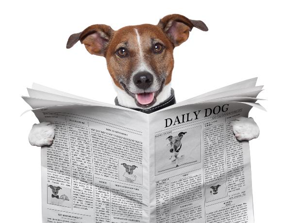 "Hund ""liest"" Zeitung, humorvolles Bild"
