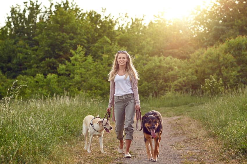 Frauchen geht mit 2 Hunden Gassi - Gassigeh-Pflicht oder Hundeführerschein sinnvoll?