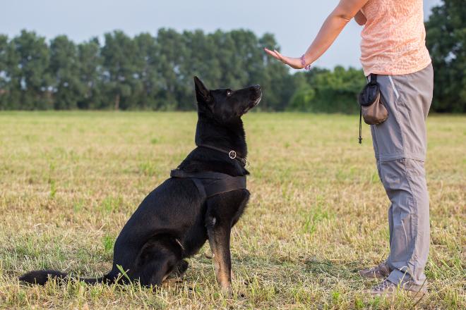Frau gibt per Hand Befehl an sitzenden Hund - Begleithundeprüfung