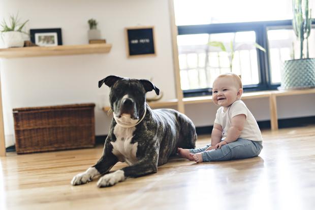 Kleinkind sitzt neben einem größeren Hund