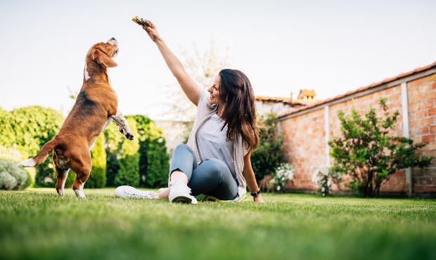 Frauchen füttert Hund mit Snack - Rindfleisch für Hunde