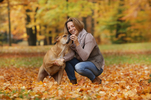 Frauchen füttert Leckerli an Hund - Positive Verstärkung