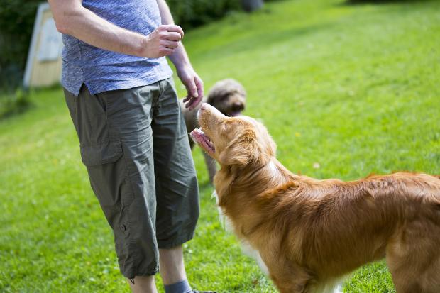 Mann gibt Hund Leckerli - Positive Verstärkung für Hunde