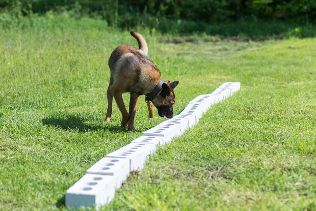 Hund schnüffelt draußen nach Leckerli