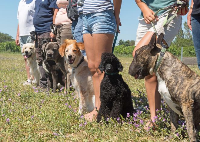 Hundebesitzer mit ihren Tieren in einer Hundeschule