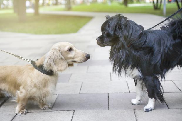 Zwei angeleinte Hunde begegnen sich