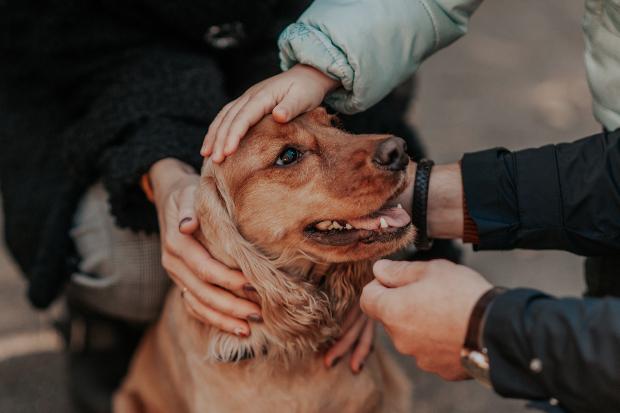 Hund wird von 3 Personen gestreichelt