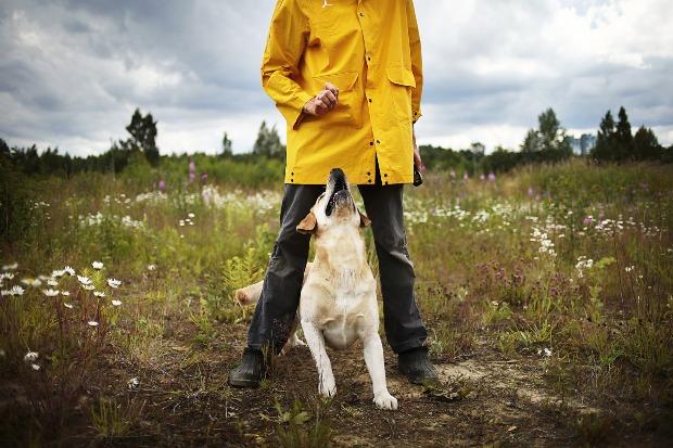 Mann gibt seinem Hund ein Leckerli