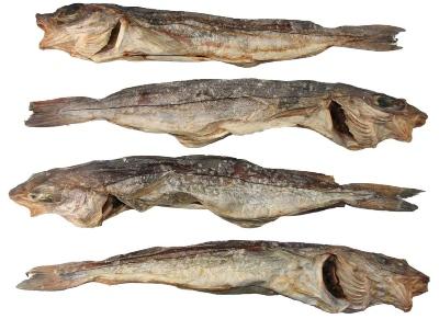 Kabeljau ( ganze Fische ) XL