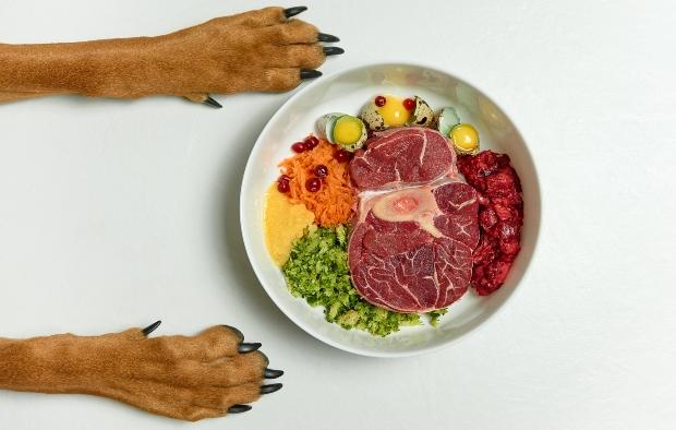 Hund sitzt vor verschiedenen Nahrungsmitteln - enthält viele Spurenelemente