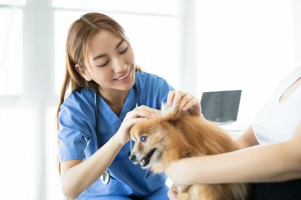 Hund bei Tierärztin