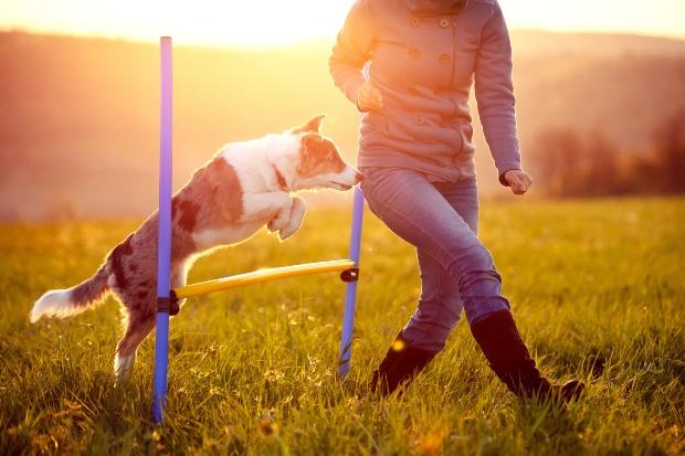 Hund springt über Hindernis, wird von Frauchen angeleitet