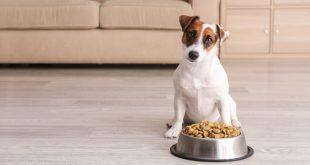 Hund mit Frssnapf - Welches Hundefutter für kastrierte Hunde?