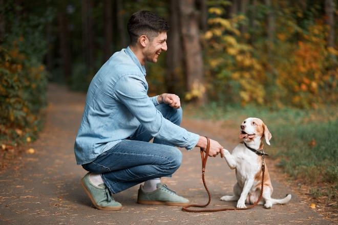 Herrchen gibt kleinem Hund Pfötchen - Grundlegende Hundeerziehungsmethoden