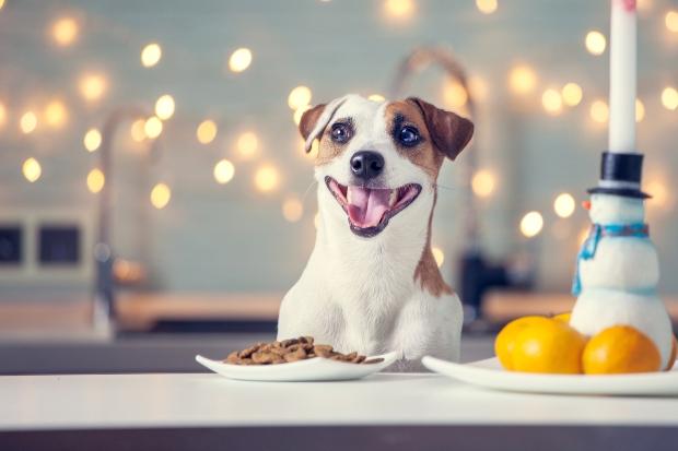 Hund zu Weihnachten freut sich auf sein Futter