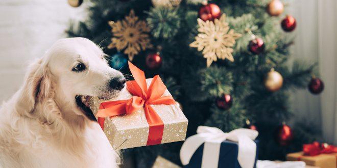 Hund mit Weihnachtsgeschenk im Maul - Frohe Hundeweihnachten