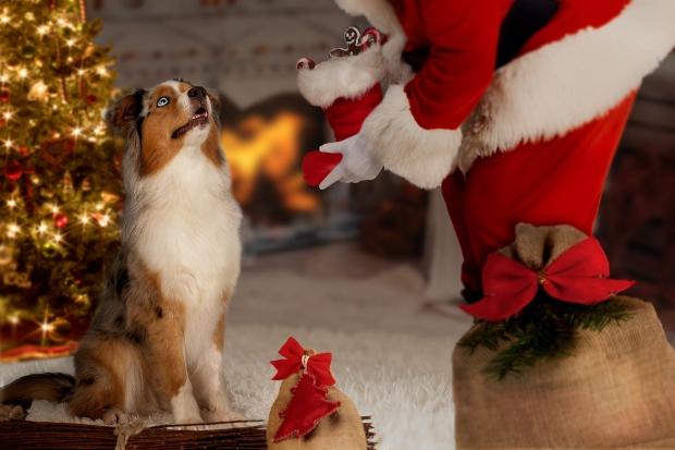 Hund schaut auf Weihnachtsmann - Frohe Hundeweihnachten
