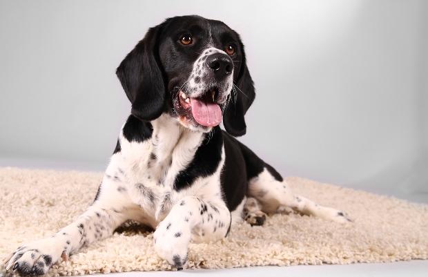 Hund sitzt auf Matte und hechelt