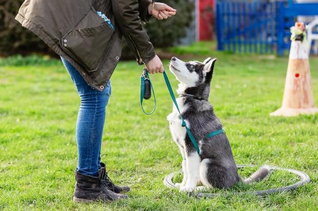 Hund wird auf Hundetrainingsplatz geschult - Grundlegende Hundeerziehungsmethoden