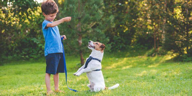Junge trainiert mit Hund - Grundlegende Hundeerziehungsmethoden