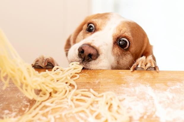 Hund frisst selbstgemachte Nudeln - Unverträglichkeit bei Hunden durch Gluten