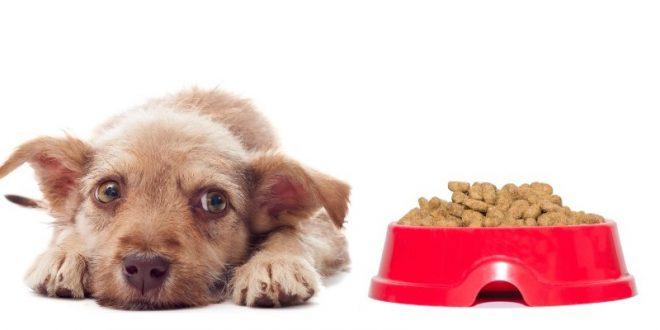 Unverträglichkeit bei Hunden