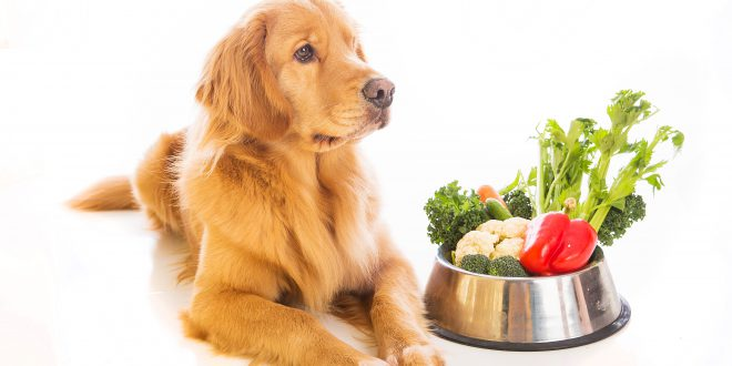 Hund mit Gemüse - purinarme Ernährung für Hunde