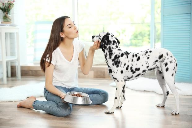 Dalmatiner wird von Frauchen gefüttert - purinarme Ernährung für Hunde
