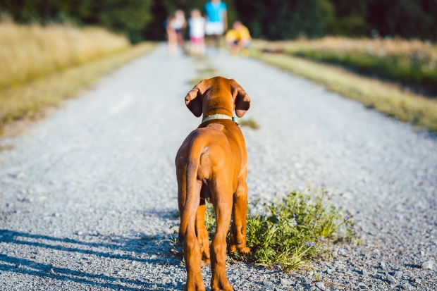 Hund blickt auf eine Familie in der Ferne
