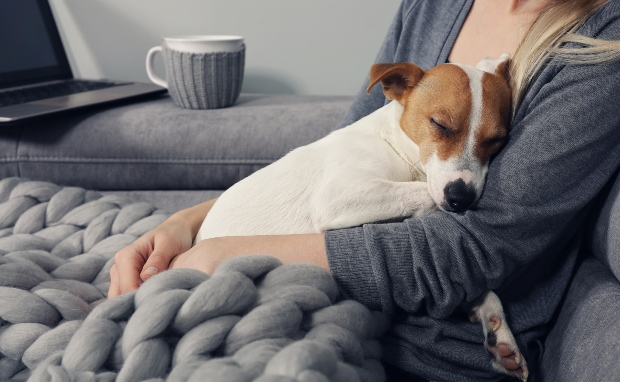 Junger Hund schläft in den Armen von Frauchen