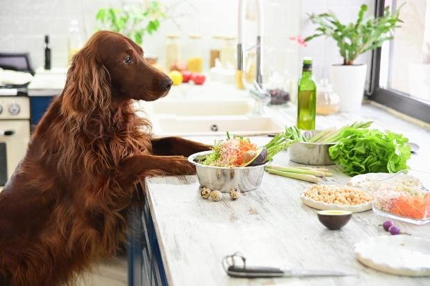 Hund sitzt vor einem Tisch mit diversem Gemüse - Ernährungspyramide für Hunde