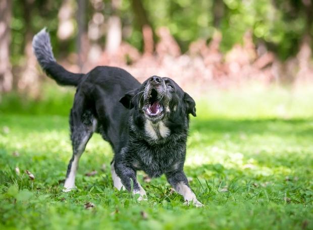 Aggressiver Hund - Mögliches Verhalten beim Angsthund
