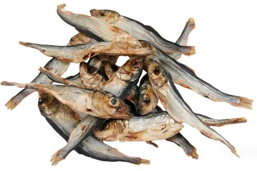 Sprotte groß - ganze Fische - Sprotten für den Hund