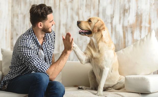 """Hund und Herrchen machen """"High Five"""""""