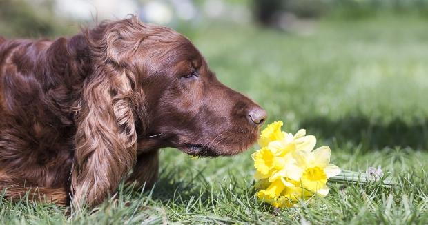Hund riecht an Blume