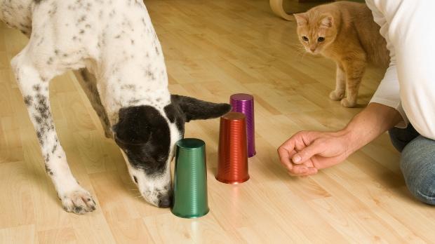 Hund macht Hütchenspiel - Schnüffelspiele für Hunde