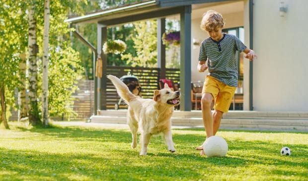 Hund spielt mit Junge - Kondition beim Hund aufbauen