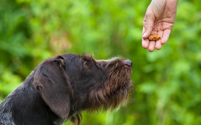 Hund bekommt Leckerli