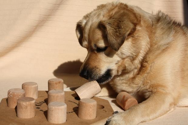 Hund beim Hundepuzzle