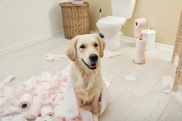 Hund hat mit Toilettenpapier gespielt - vielleicht ist der Hund unterfordert