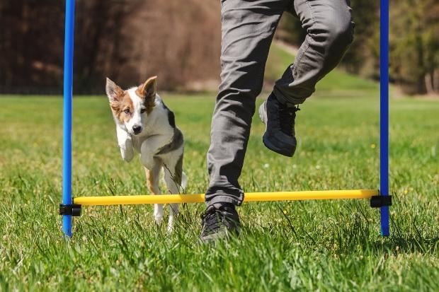 Hund mit Herrchen beim Agility Training