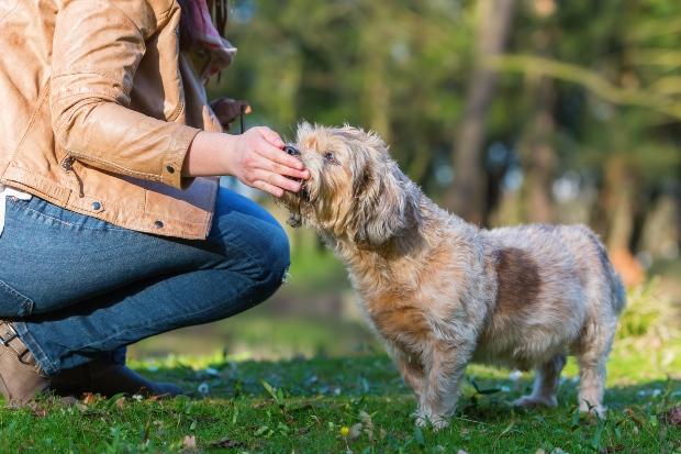Frauchen gibt Hund Leckerli - Kondition beim Hund aufbauen durch Belohnung