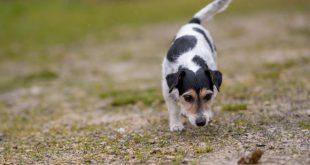 Hund nimmt Fährte auf - Schnüffelspiele für Hunde