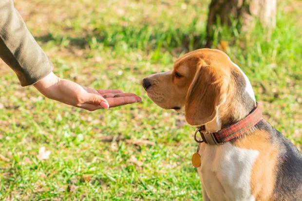 Hund bekommt Leckerli - Exotische Hundeleckereien