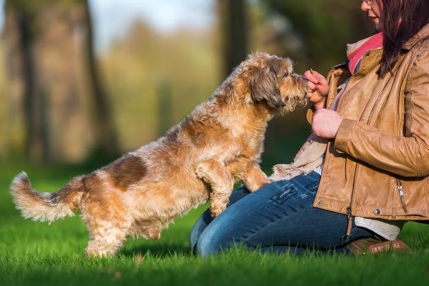 Frauchen gibt Hund ein Leckerli