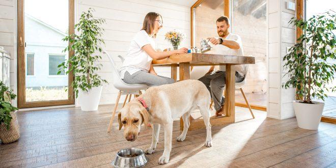 Junges Paar mit Hund - Leber für Hunde