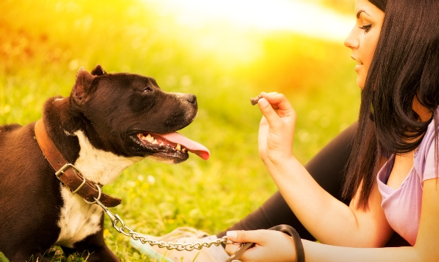 Hund wird von Frauchen gefüttert - Exotische Hundeleckereien sind für alle Vierbeiner geeignet