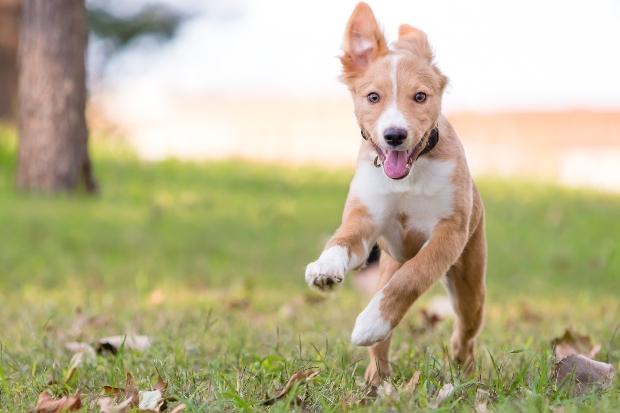 Welpe rennt - Tipps, damit Welpen nachts durchschlafen können