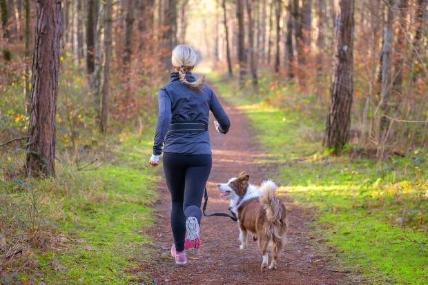 Frau Joggt mit Hund im Wald - Joggen mit Hund ist gesund für alle