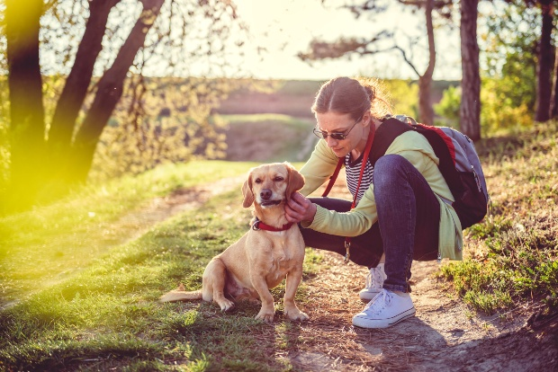 Junge Frau untersucht ihren Hund auf Hundezecken